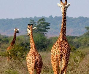 Wildlife Rwanda