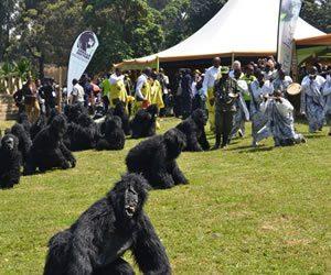Gorilla Naming